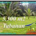 LAND IN Tabanan Penebel BALI FOR SALE TJTB295