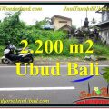 FOR SALE Affordable LAND IN Sentral Ubud BALI TJUB565