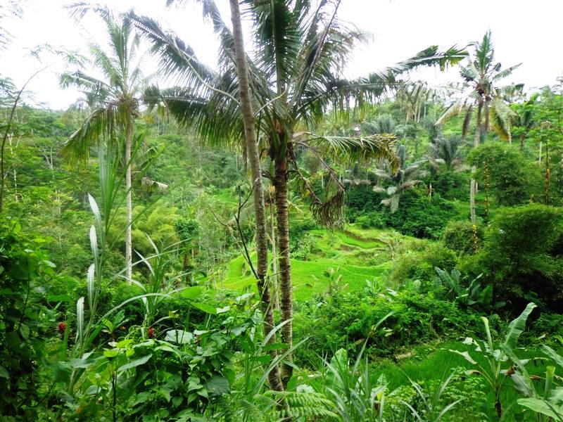 Ubud Bali Land for sale