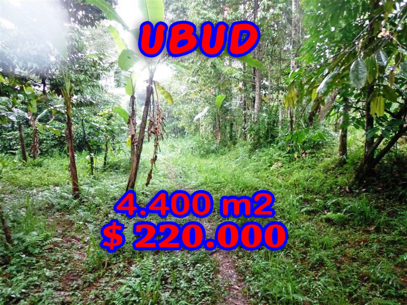 Land for sale in Ubud Bali 4.400 sqm in Ubud Tegalalang