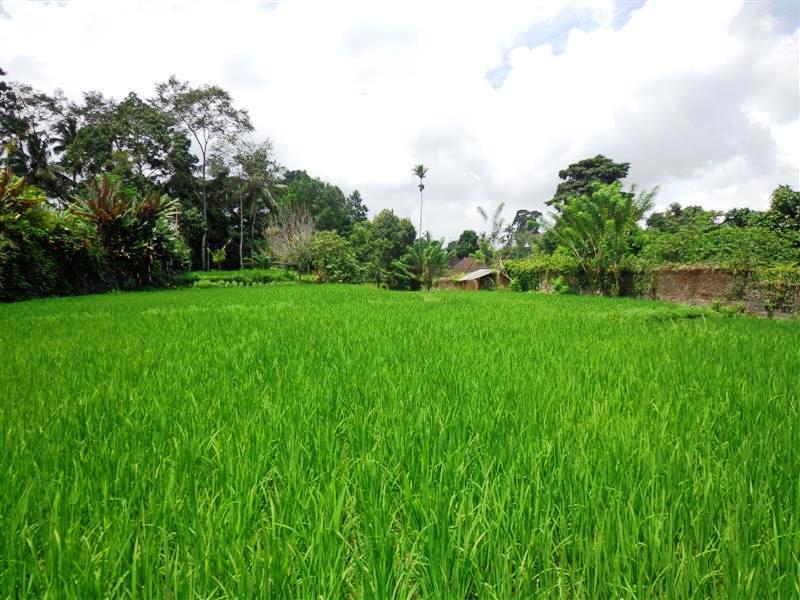 Land for sale in Ubud Bali - TJUB208 by the roadside