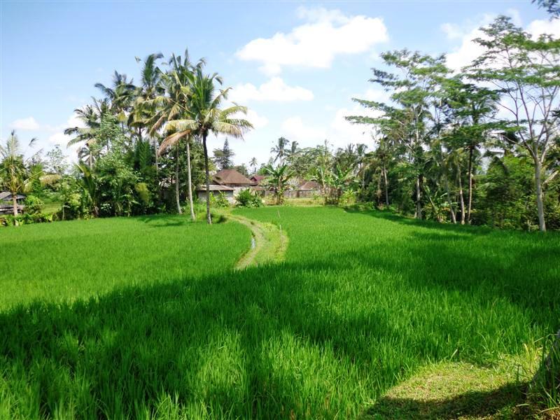 3 Ubud Land for sale
