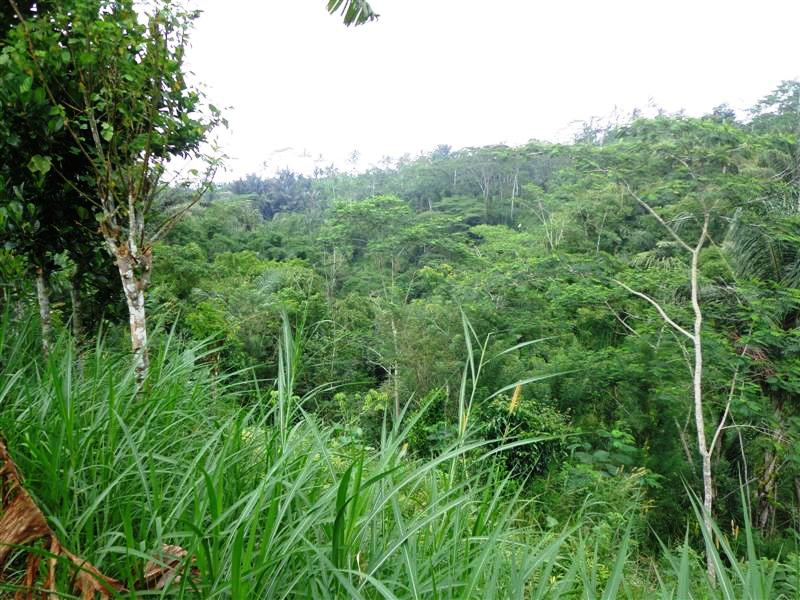 Land for sale in Ubud Bali Land for sale in Ubud Bali