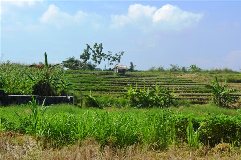 Land for sale in Canggu Batu Bolong Bali