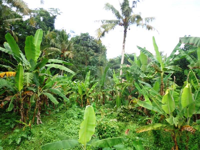 Land for sale in Ubud land