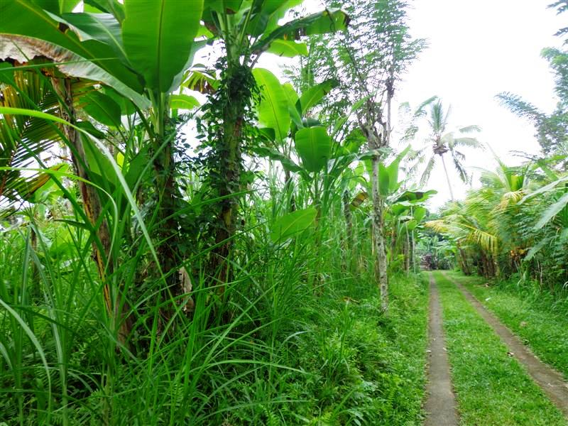 Ubud land for sale in Bali Indonesia