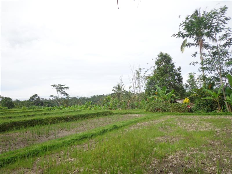 Bali land for sale in Ubud