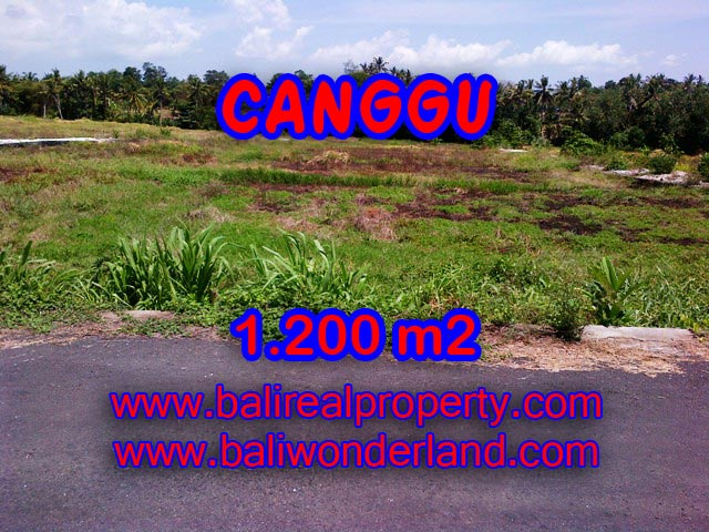 Exotic Property in Bali, land in Canggu Bali for sale – TJCG126