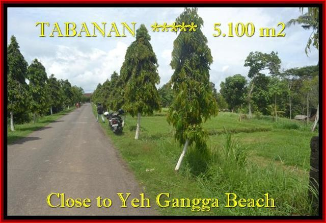 Beautiful 5.100 m2 LAND FOR SALE IN TABANAN BALI TJTB186