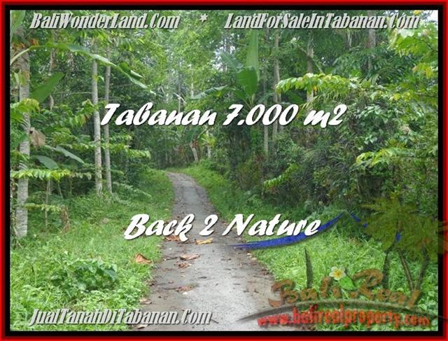 FOR SALE Exotic 7.000 m2 LAND IN TABANAN TJTB176
