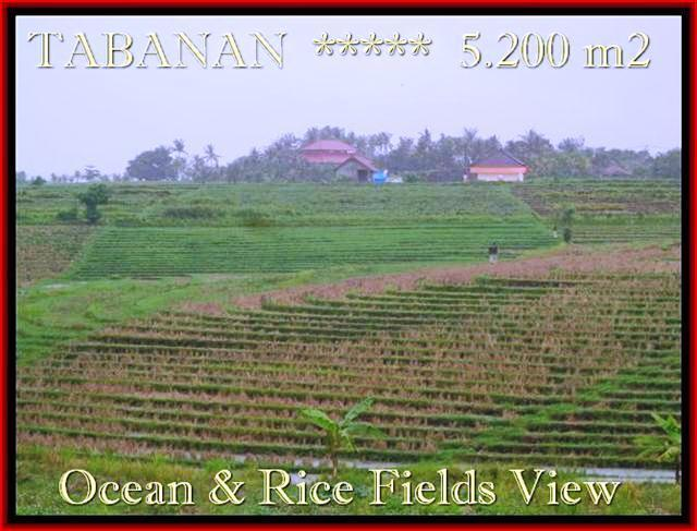Affordable PROPERTY 5.200 m2 LAND IN TABANAN BALI FOR SALE TJTB185