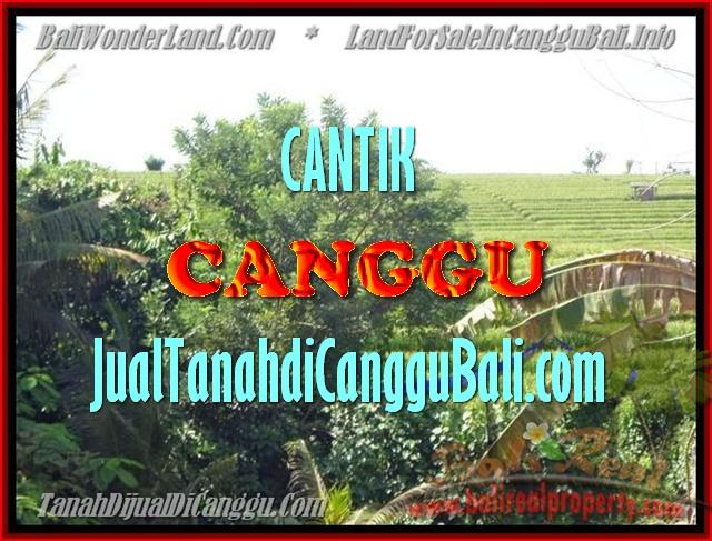 Magnificent PROPERTY LAND FOR SALE IN Canggu Pererenan BALI TJCG143