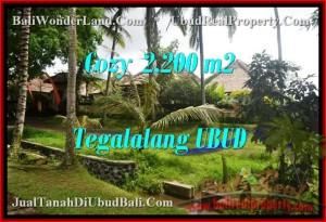 Affordable PROPERTY LAND SALE IN Ubud Tegalalang BALI TJUB462