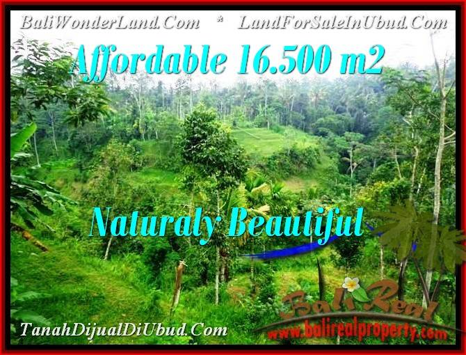 Magnificent PROPERTY 16,500 m2 LAND FOR SALE IN Ubud Tampak Siring TJUB494