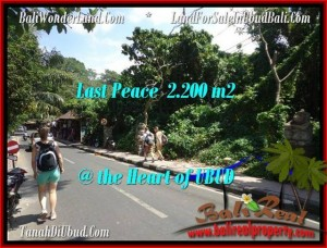 FOR SALE 2,200 m2 LAND IN UBUD TJUB509