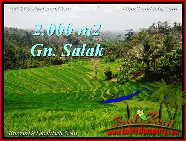 Affordable LAND SALE IN Tabanan Selemadeg BALI TJTB220