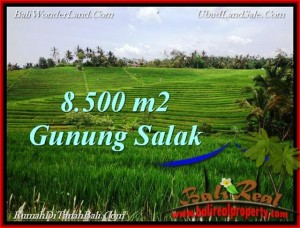 Beautiful LAND FOR SALE IN TABANAN TJTB223