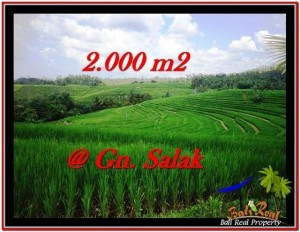 Exotic PROPERTY 2,000 m2 LAND FOR SALE IN Tabanan Selemadeg TJTB227