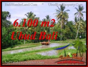 Affordable PROPERTY 6,100 m2 LAND FOR SALE IN Ubud Tegalalang TJUB552