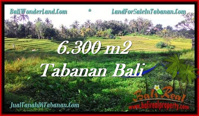 Beautiful PROPERTY Tabanan Selemadeg 6,300 m2 LAND FOR SALE TJTB275