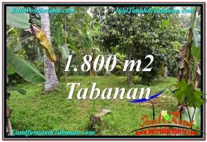 Magnificent PROPERTY 1,800 m2 LAND FOR SALE IN Tabanan Penebel TJTB293