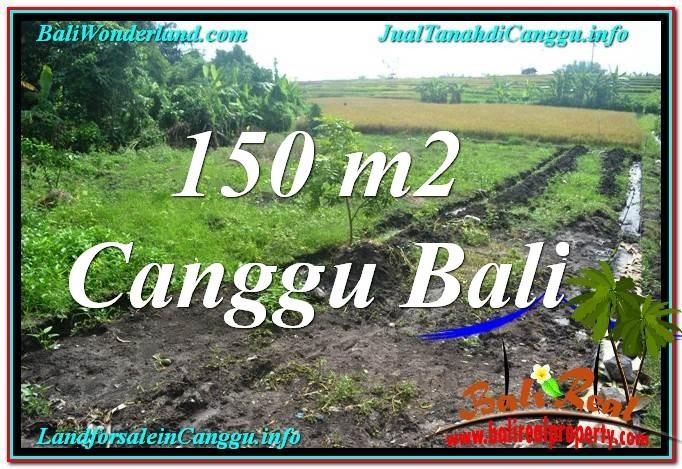 FOR SALE Beautiful LAND IN Canggu Pererenan TJCG213