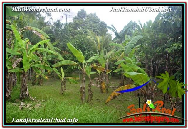 FOR SALE Beautiful PROPERTY LAND IN SENTRAL UBUD TJUB680
