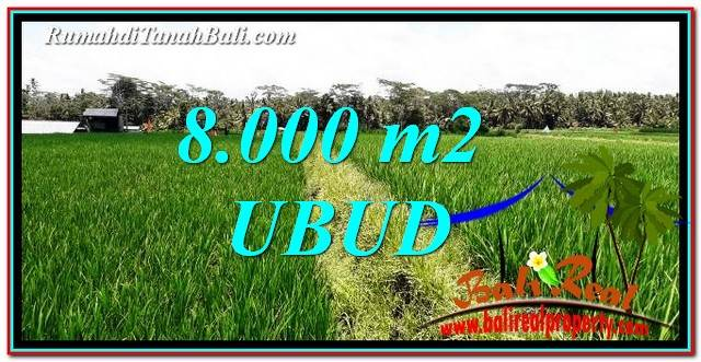 Affordable PROPERTY 8,000 m2 LAND IN Ubud Pejeng FOR SALE TJUB763