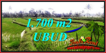 LAND IN UBUD FOR SALE TJUB745