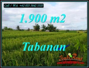 Magnificent LAND FOR SALE IN SELEMADEG TABANAN TJTB495