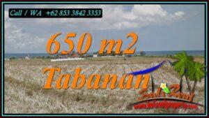FOR SALE Affordable 650 m2 LAND IN SELEMADEG TABANAN TJTB453