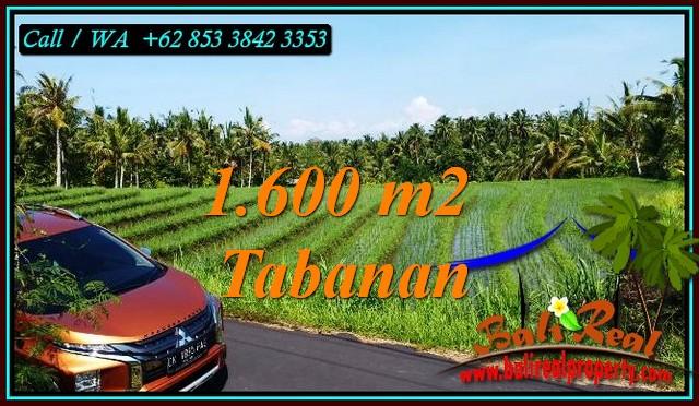 1,600 m2 LAND SALE IN SELEMADEG BARAT TJTB471