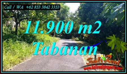 Beautiful 11,900 m2 LAND SALE IN SELEMADEG BARAT BALI TJTB474