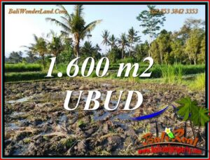 Affordable 1,600 m2 LAND for SALE in Tampaksiring BALI TJUB807